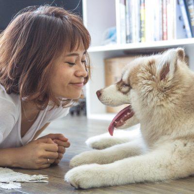 pet-insurance